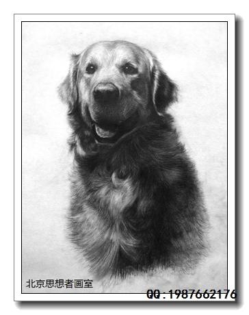 央美超写实素描动物